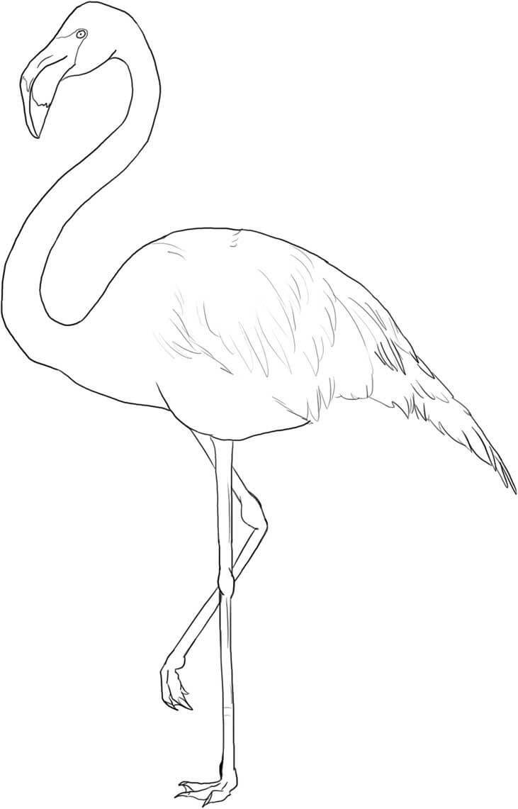 фламинго для срисовки
