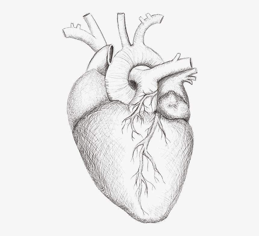 рисунки для срисовки легкие и красивые сердечки