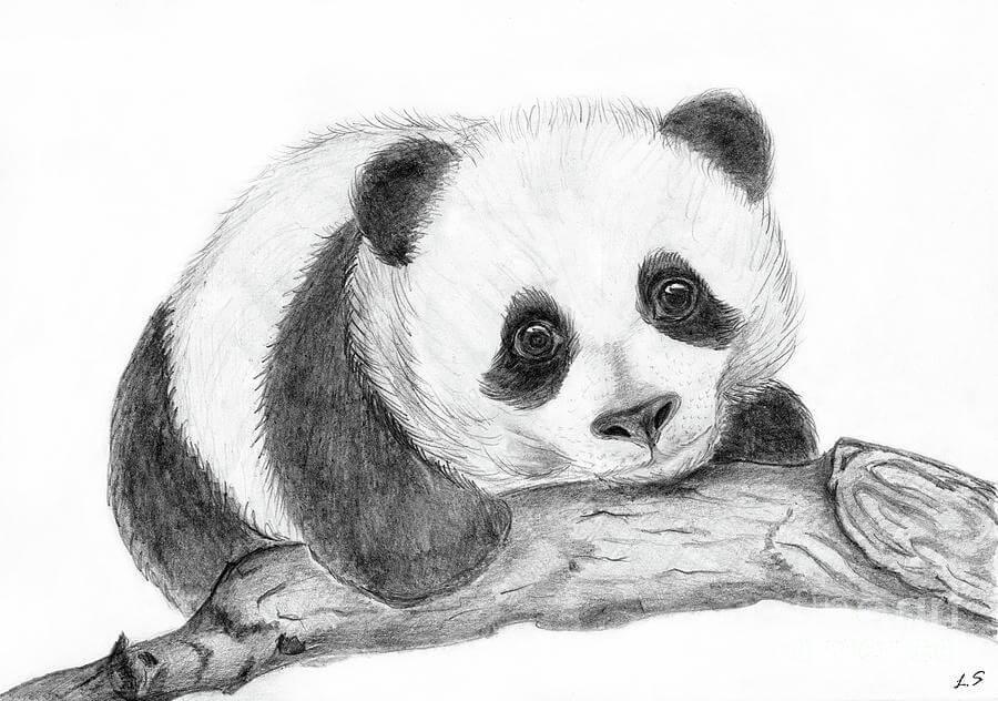 картинки панды для срисовки