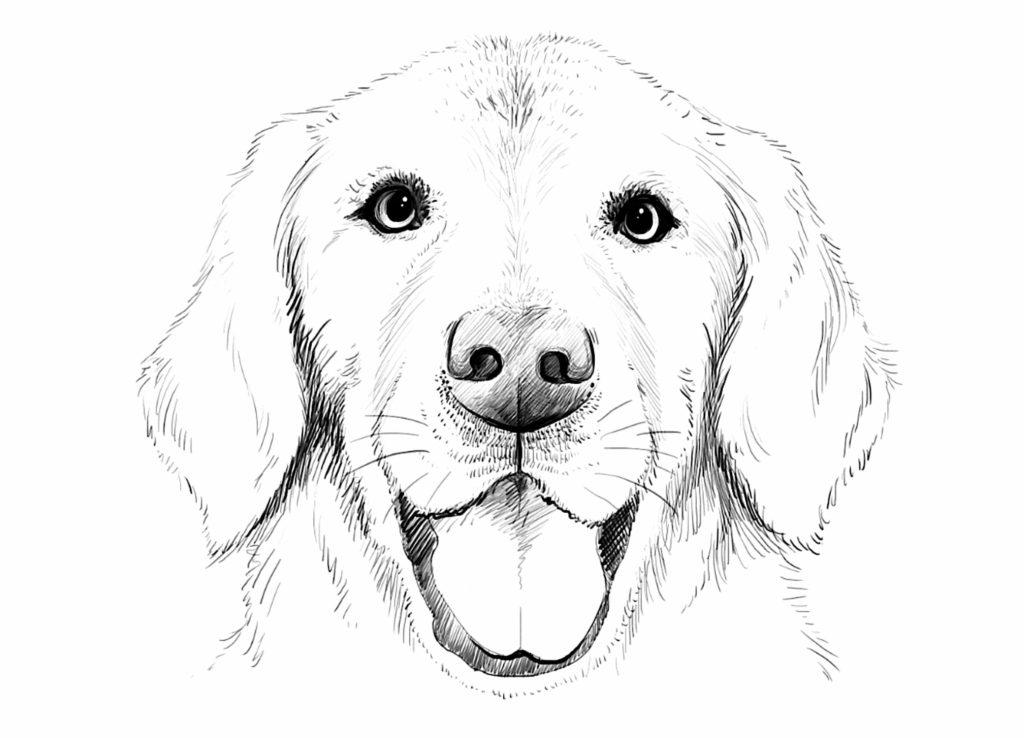 арты собак для срисовки