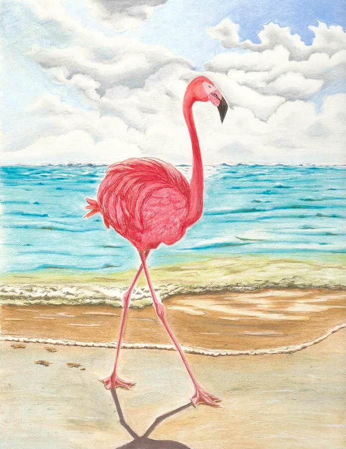 фото фламинго для срисовки