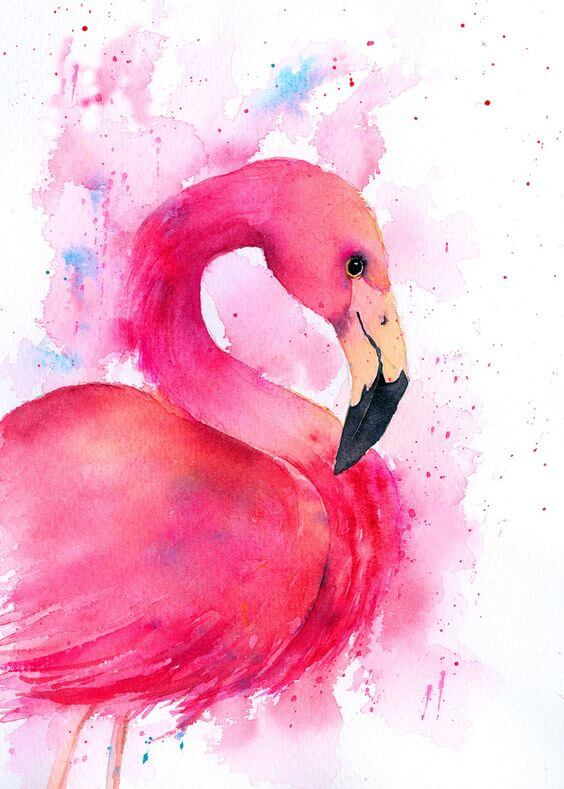 рисунок фламинго для срисовки