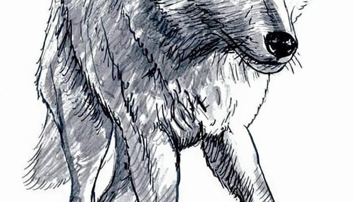 картинки волка для срисовки легкие