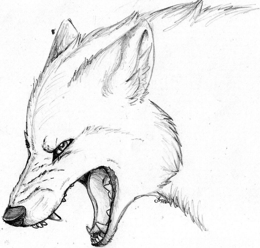 картинки волка для срисовки