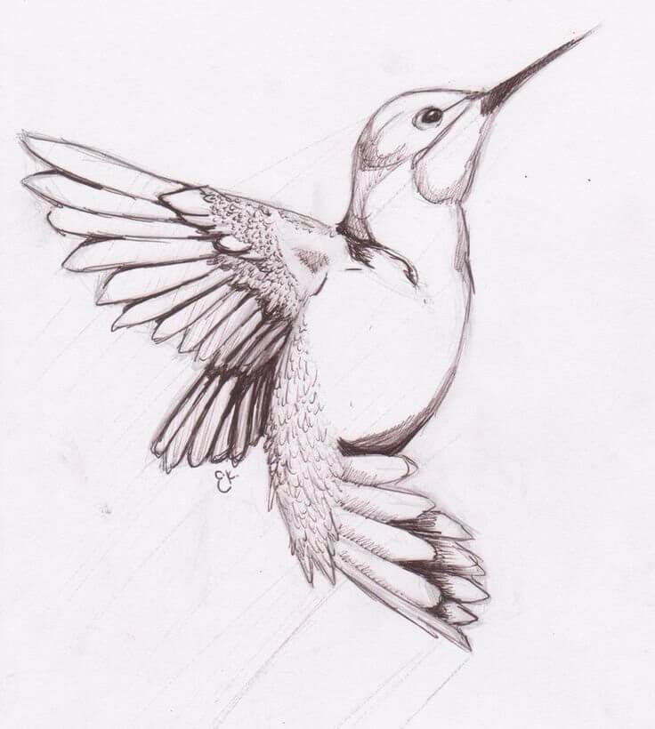 рисунки для срисовки птички калибри