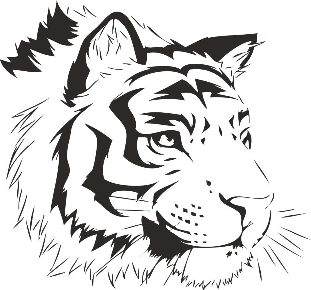 рисунок тигра для срисовки