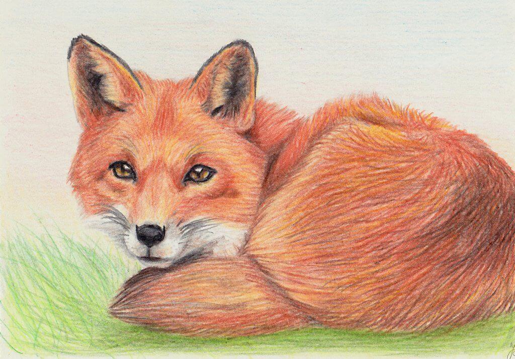 милые лисички для срисовки