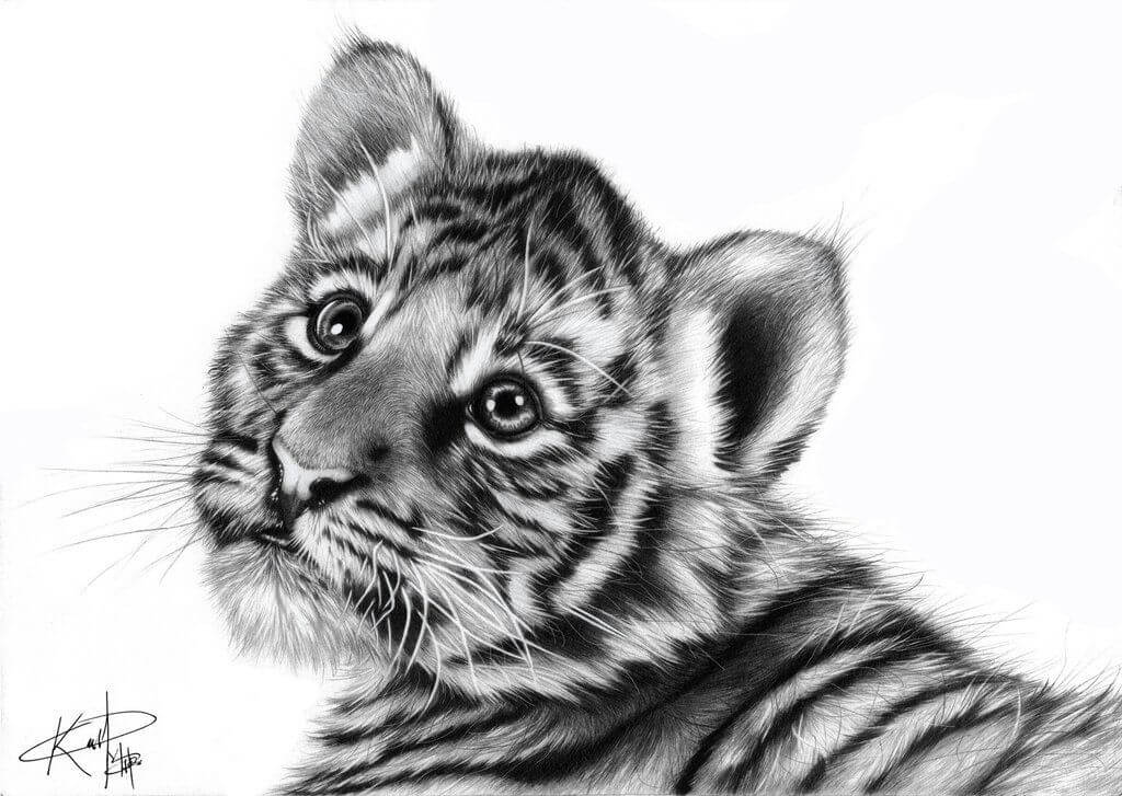 картинки тигра для срисовки легкие