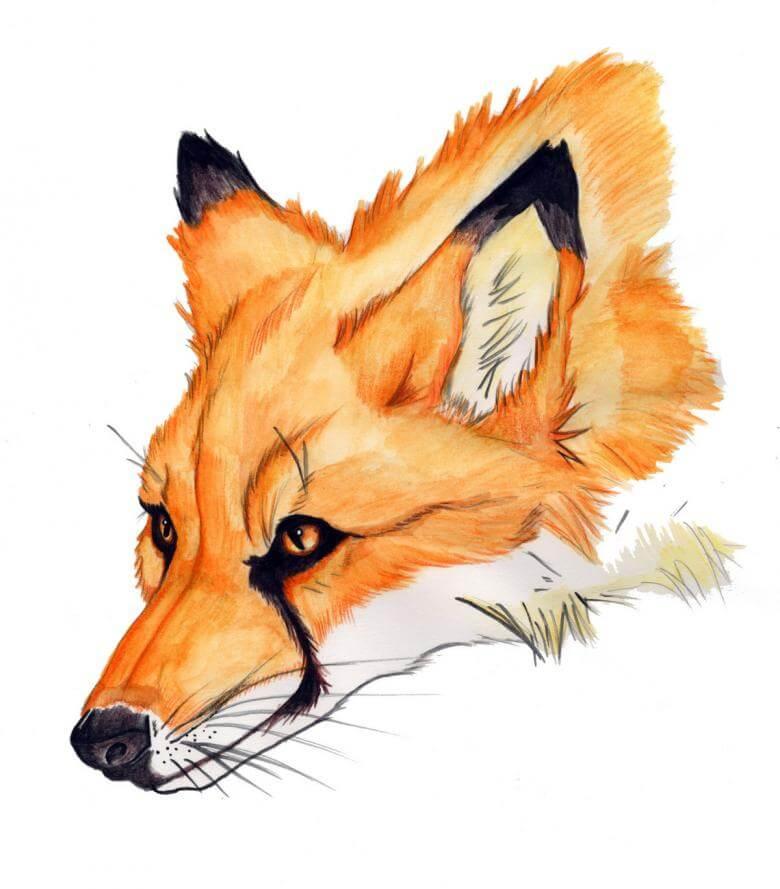 рисунки для срисовки красивые лисы