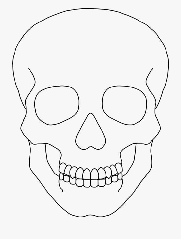 череп для срисовки легкие