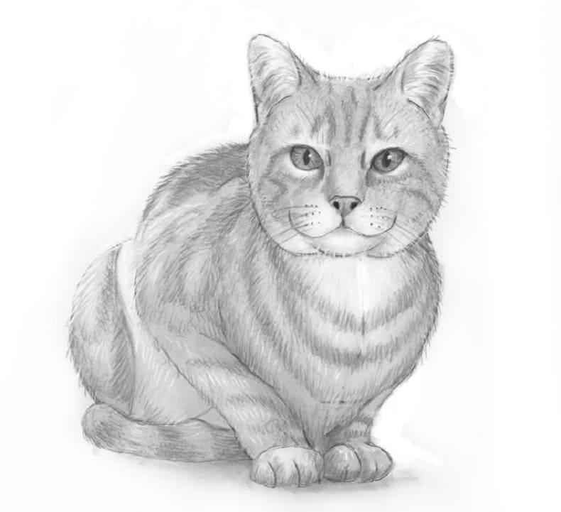 рисунок кота для срисовки легкие для начинающих