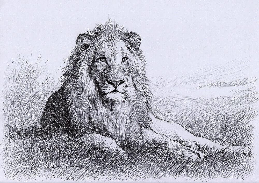 лев для срисовки легко