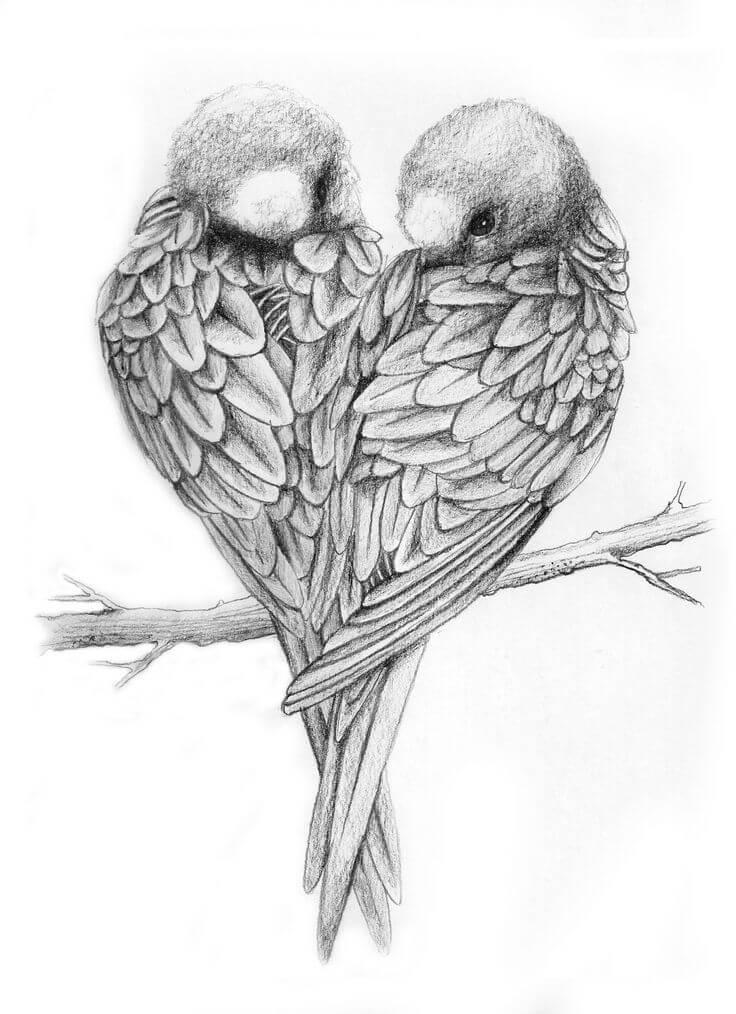 рисунки для срисовки птички