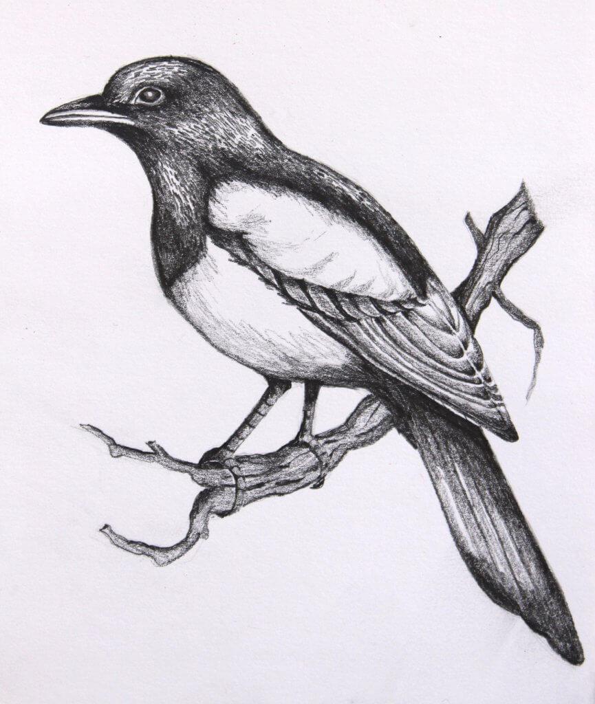 картинки для срисовки птички