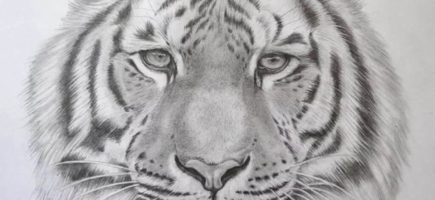 фото тигра для срисовки