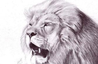 лев для срисовки карандашом