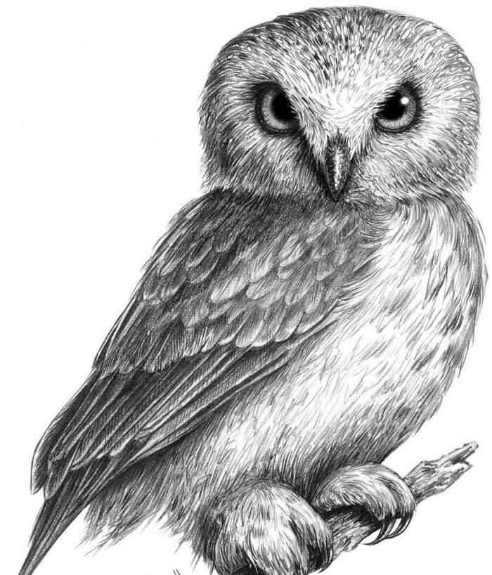 рисунки птиц для срисовки сова