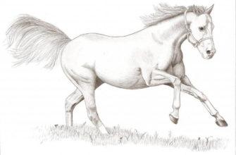 картинки лошадей для срисовки