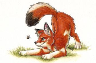 рисунки для срисовки лисички