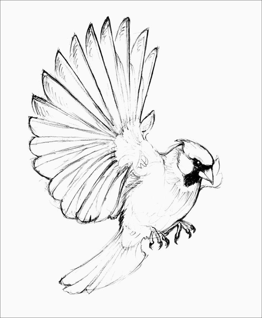 рисунки птиц для срисовки крылья