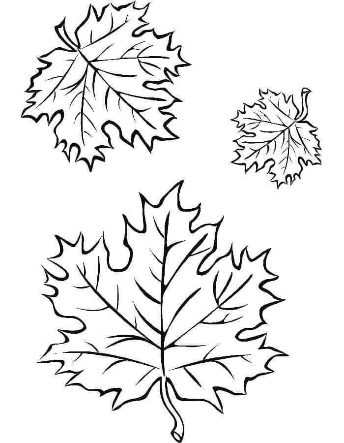красивые листочки для срисовки