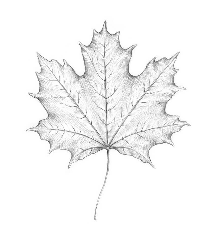 Листья для срисовки