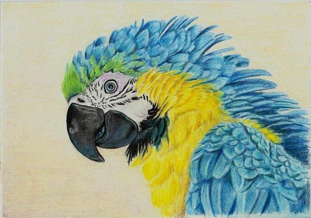 картинки для срисовки попугай цветные