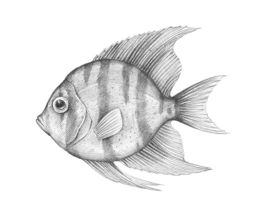 картинки рыбок для срисовки
