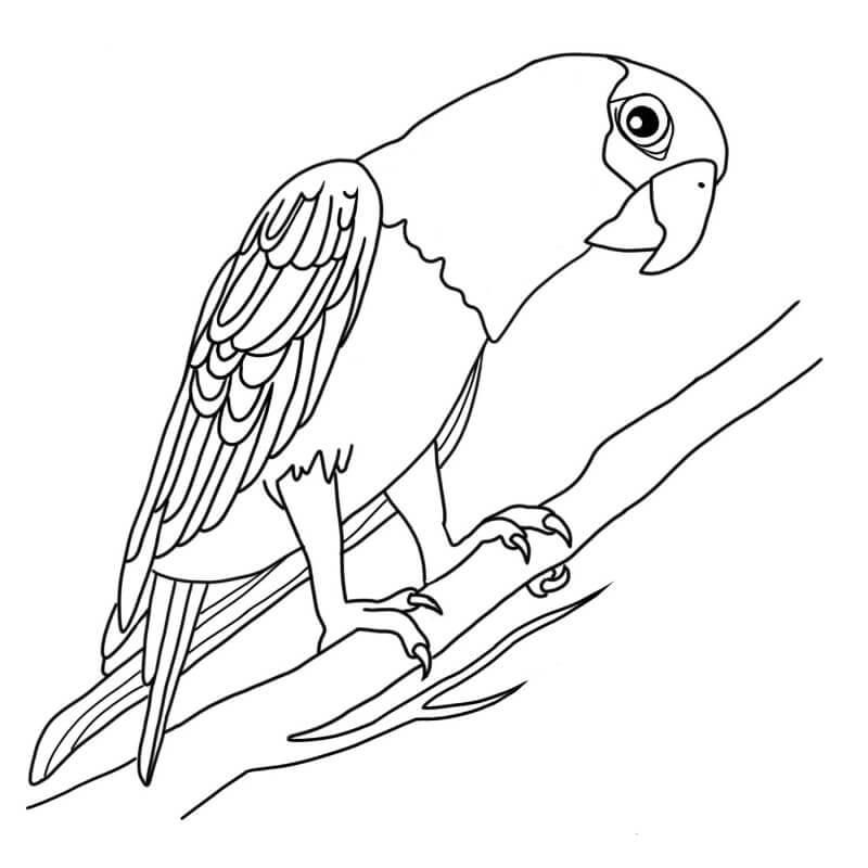 рисунки для срисовки попугай легкие