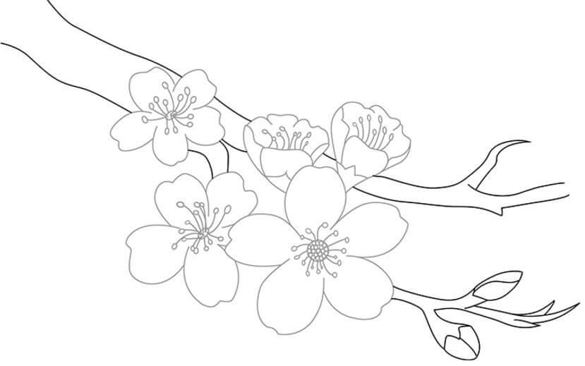 рисунок сакуры для срисовки простые