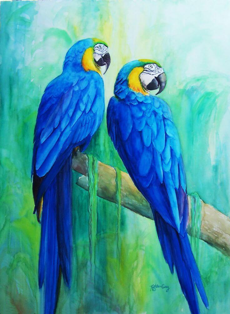рисунки для срисовки попугай цветные