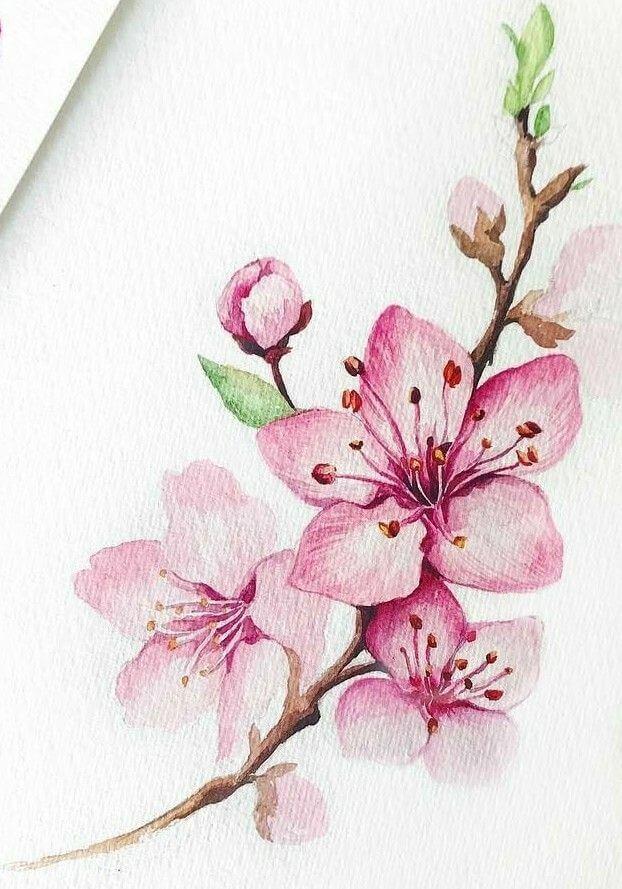 рисунок сакуры для срисовки розовая