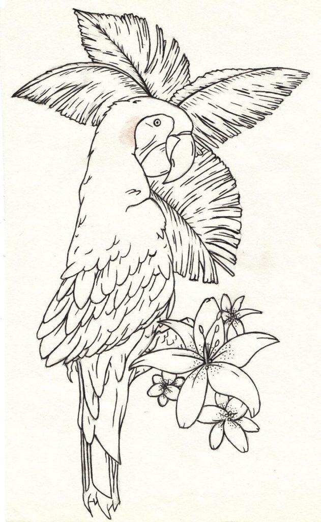 рисунки для срисовки попугай
