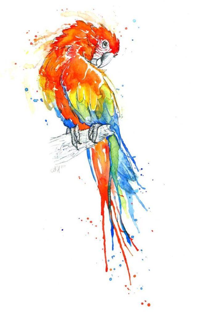 картинки для срисовки попугай красками