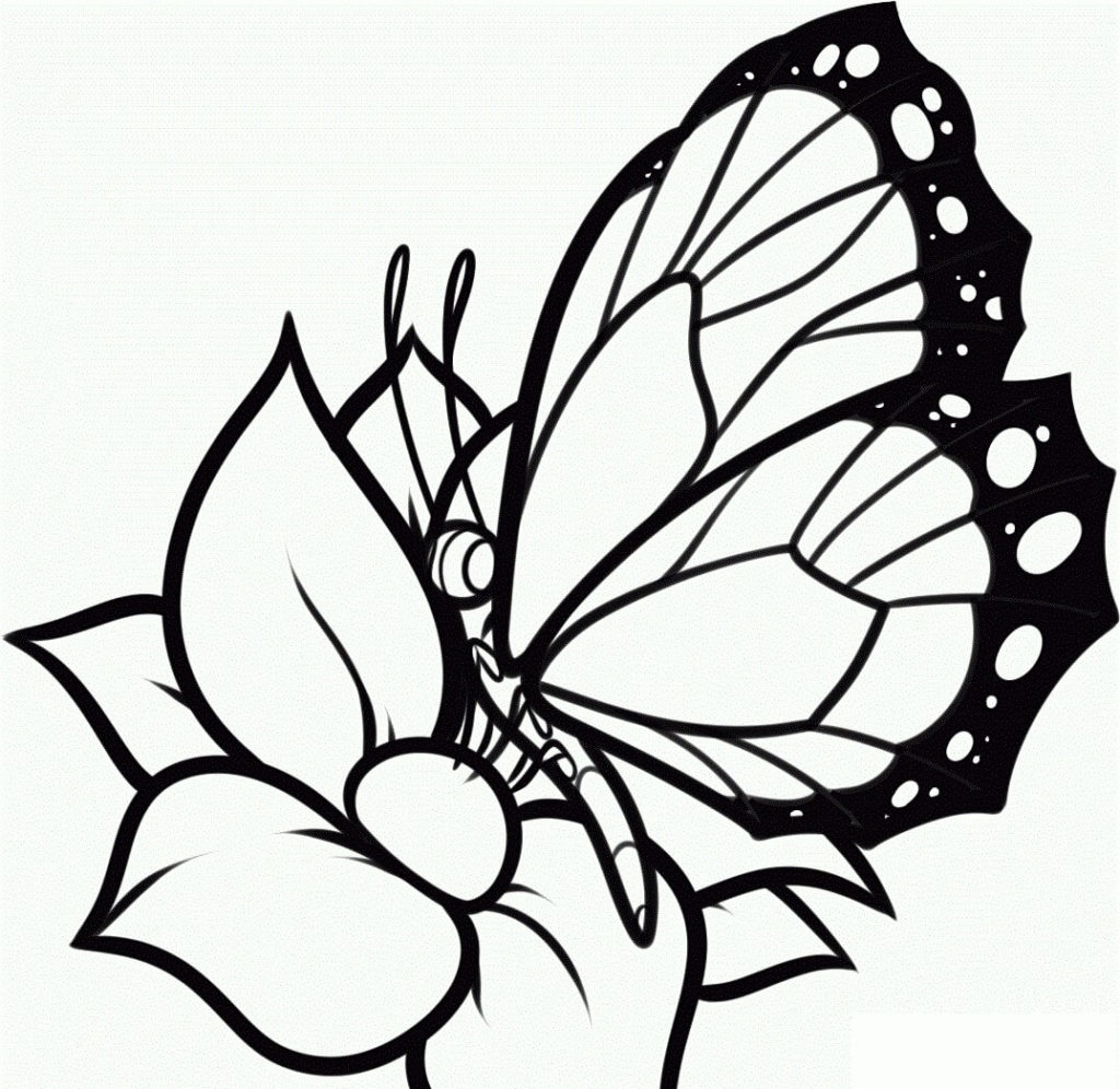 рисунки для срисовки бабочки на цветке