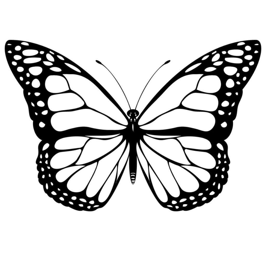 рисунки для срисовки бабочки легкие