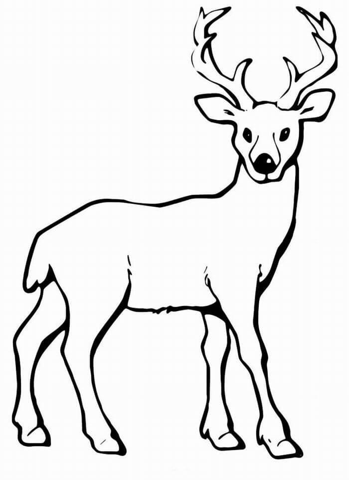 рисунки оленя для срисовки легкие