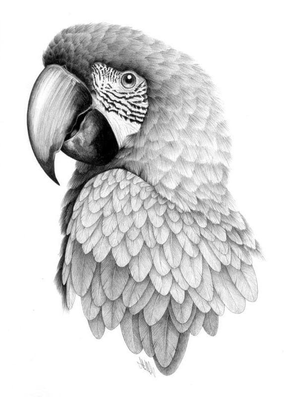 картинки для срисовки попугай милые