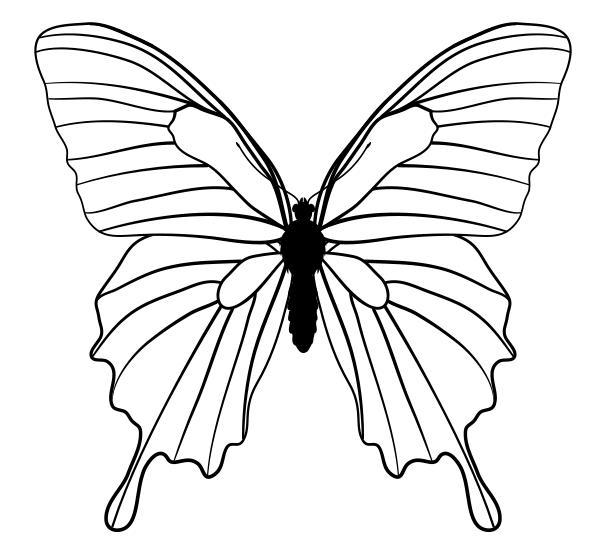 рисунки для срисовки бабочки простая