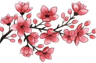картинки для срисовки дерево сакура цветные