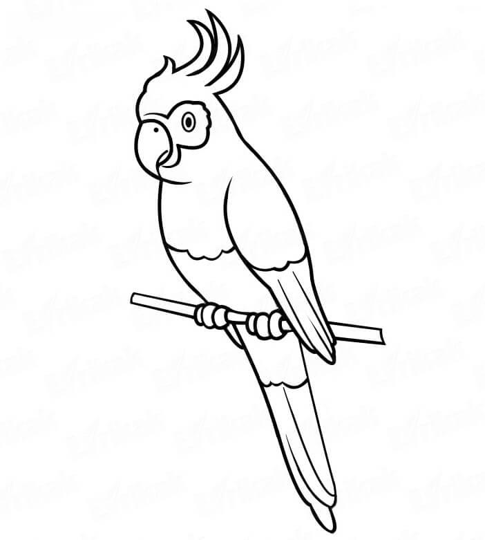 картинки для срисовки попугай для детей