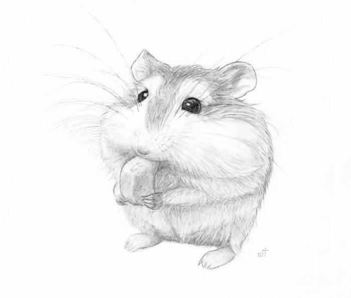 рисунок хомяка для срисовки