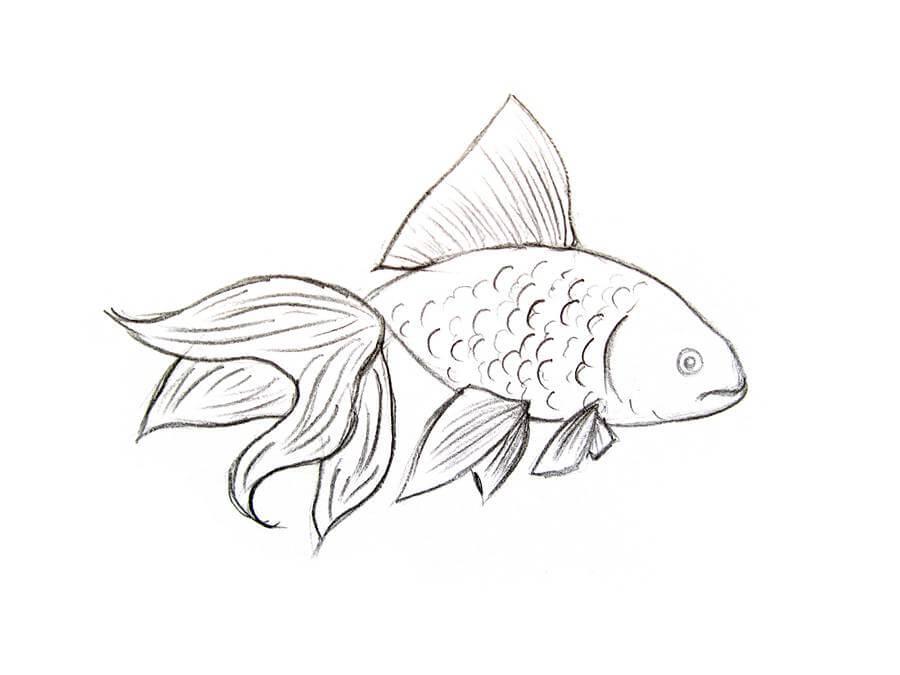 картинки для срисовки рыбы простые