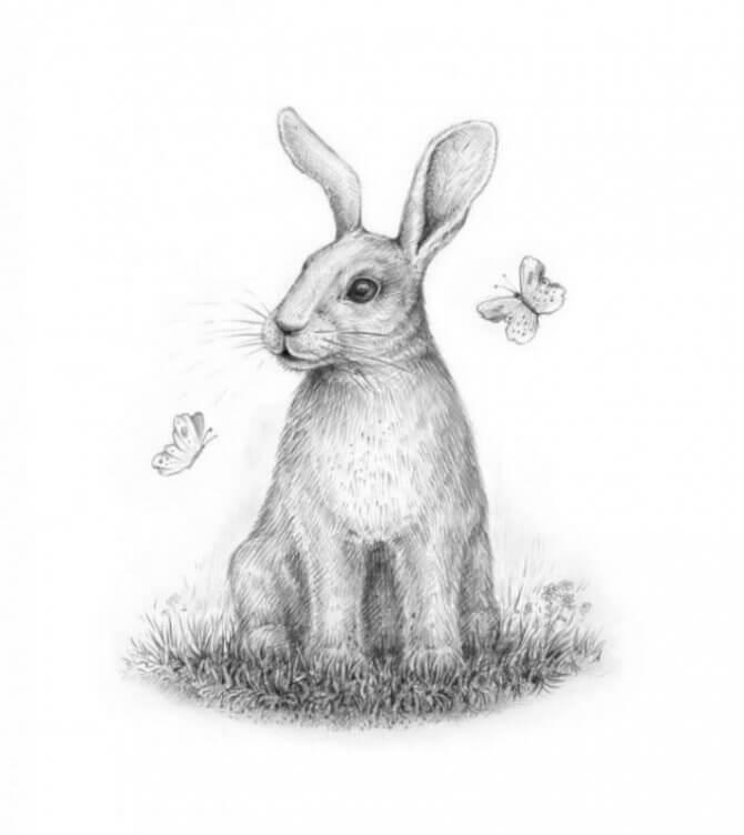 рисунок зайца для срисовки