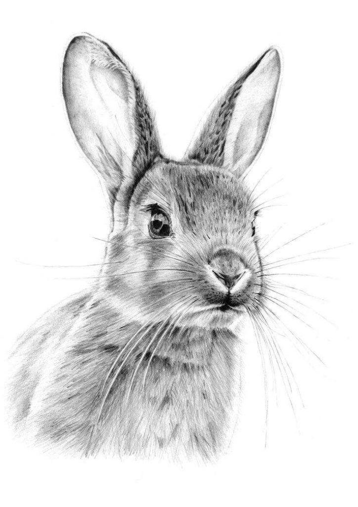 рисунок зайца для срисовки сложные