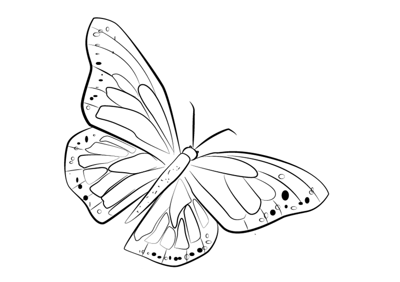 картинки для срисовки бабочки