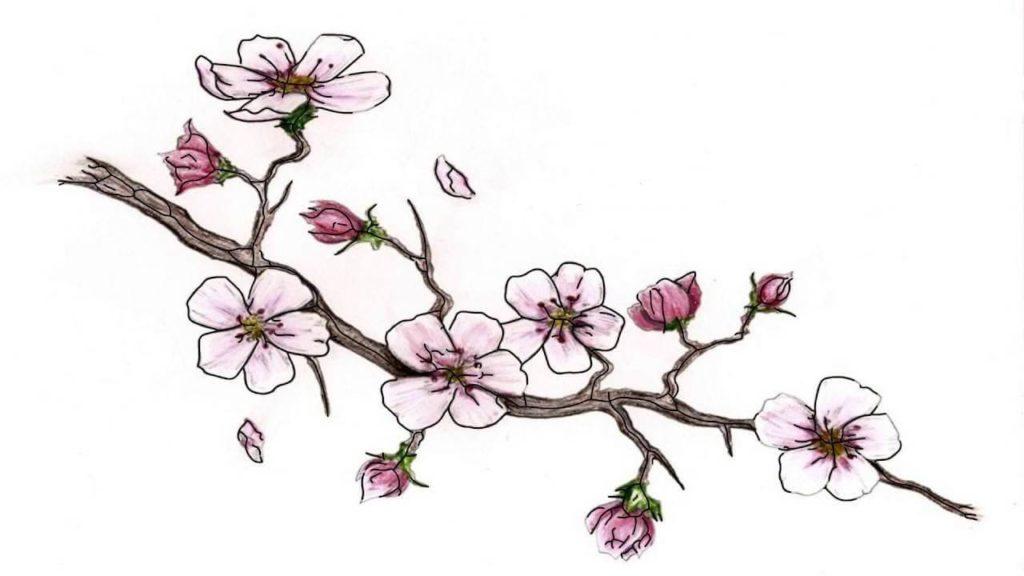 картинки сакуры для срисовки начинающим