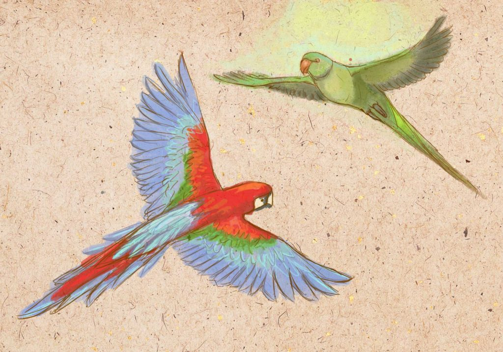 картинки для срисовки попугай легкие цветные