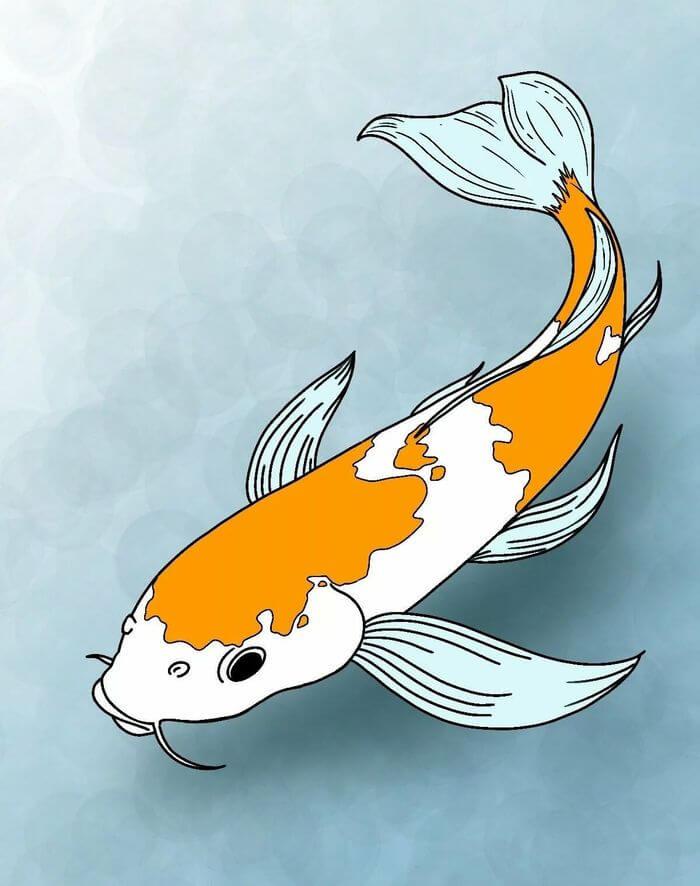 картинки для срисовки рыбы