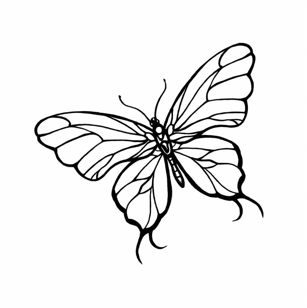 картинки для срисовки бабочки легкая
